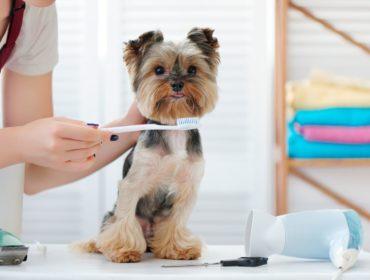 Sarro Dental en Mascotas, Mascota Express